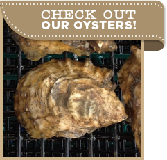 Check out our oysters